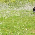 reading-in-field