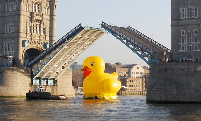 Video of the Rubber Duckie Race